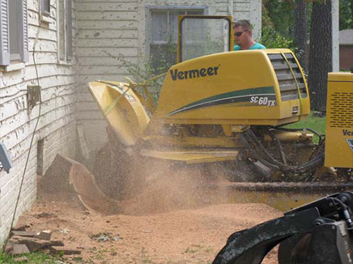 Stump Grinding and Removal Picture
