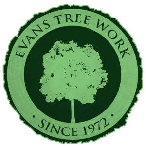 Evans Tree Work Logo